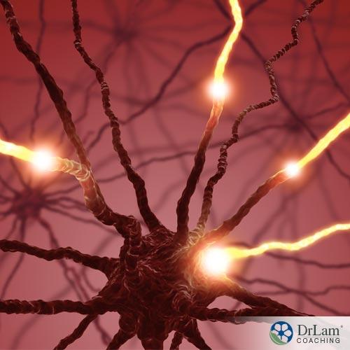 1-inst-a1-inst-autonomic-nervous-system-neurons-37008utonomic-nervous-system-neurons-37008
